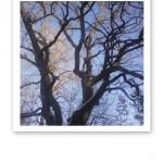 Stora, mörka trädgrenar mot en klarblå himmel.