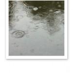 Närbild på vattenyta med ringar i olika storlekar från regndroppar.