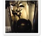 Närbild på tekula i ett glas med hett vatten, med en ljuskälla i bakgrunden.