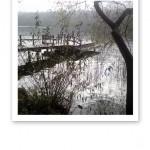 En brygga, träd och vatten i olika grå och svartvita nyanser.