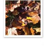 Närbild på gula och bruna lönnlöv i en dikeskant.