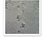 Fotspår i skare.