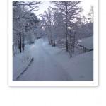 Vitt vintervy på skogspromenad.