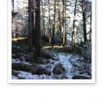 Underbar skogsglänta med snö på marken och solstrålar som faller in mellan trädstammarna.