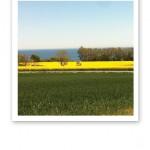 Utsikt över gröna åkrar, gula rapsfält, blått hav och blå himmel.