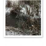 En lerig sjökant, med vass och snö i vintertid.