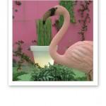 Rosa flamingo i förgrunden, gröna växter och rosa mässväggar i bakgrunden.