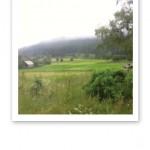 Grönskande natur, med ljusgrå moln som ligger lågt över berget.