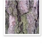 Närbild på bark som täcker en trädstam.