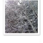 Snöfrostade grenar på ett träd.