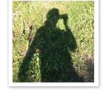 En skugga i gräs.