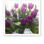En vårbukett med lila tulpaner, i ett fönster.