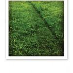 """En nyklippt """"gång"""" i en vildvuxen grön gräsmatta."""