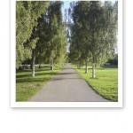 Björkar i en allé vid en gångväg, en symbolisk bild för en ny väg i livet.
