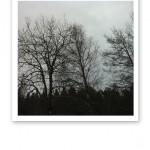 Svarta siluetter av spretiga träd mot en grå himmel: dystert.