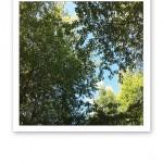 Gröna lövkronor i sommarsol mot blå himmel.