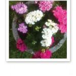 Blommande pelargoner i krukan vid dörren.