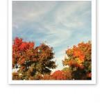 Färgsprakande höstträd mot en blå himmel.