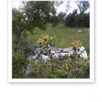 Slånbärsbuske vid picknickplats.