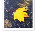 Ett lysande gult löv mot regnvåt mörkgrå asfalt.