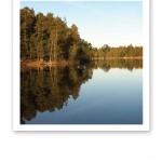 En stilla och spegelblank yta på en sjö i skogen.