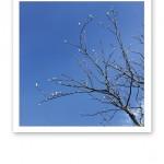 vår knoppar mot en blå himmel