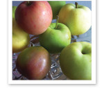 skördade äpplen